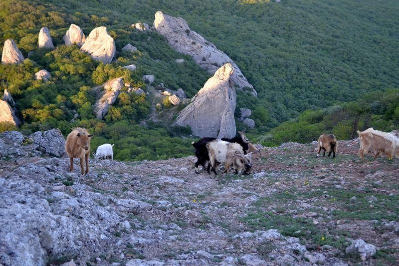 Pohod-v-Krym-Ilias-Kaja-gornye-kozly
