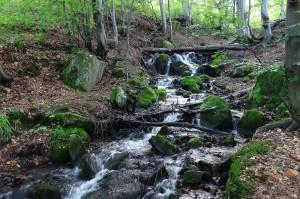 yoga-pohod-v-karpati-na-vihodnie-vodopad