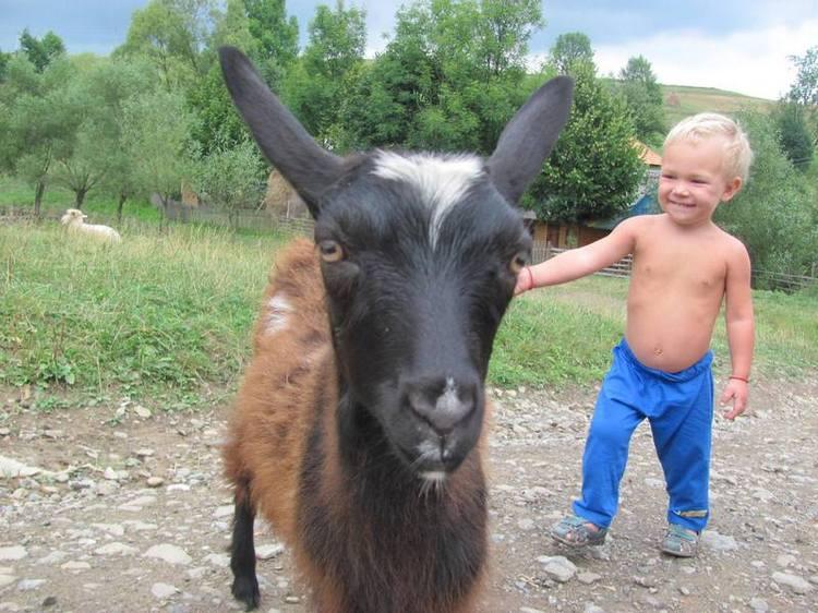 Детские походы в Карпаты. Знакомство с природой