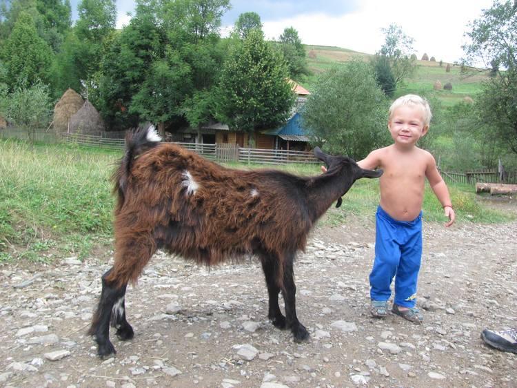 Детские походы в Карпаты. Знакомство