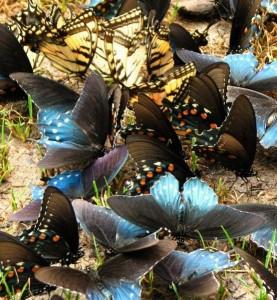 Pohod Turciya-Butterfly_Valley_likiyskaya_tropa